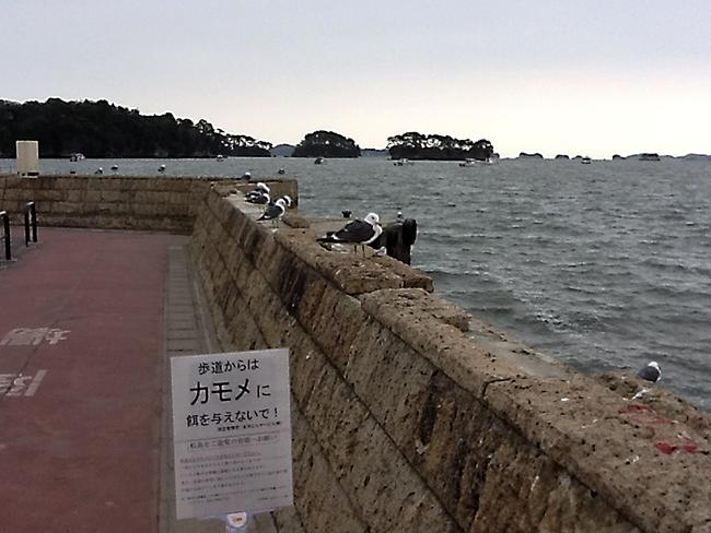 日本三景 松島 観光 9